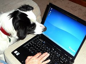 dog watches cursor move on laptop